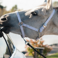 Driving around horses - tips from IAM RoadSmart